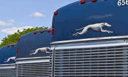 shutterstock image of greyhound buses